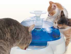 Fontaine à chats, indispensable en été