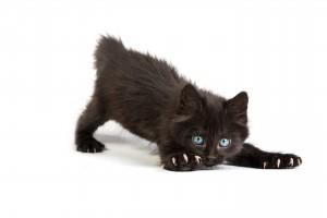 Le chat domestique garde ses instincts de chasseur