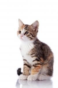 Un chat timide