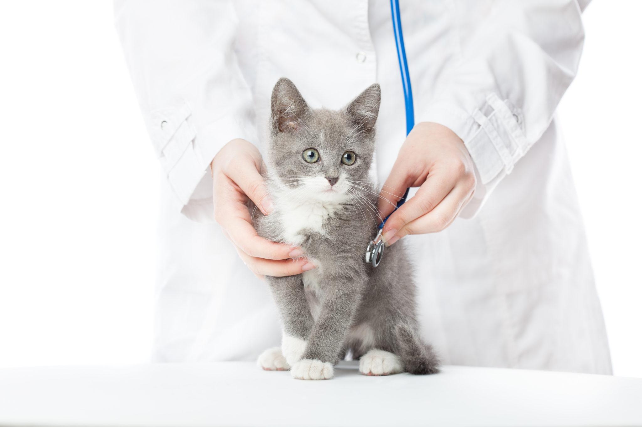 Prévenir les maladies du chat