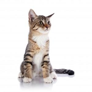 Choisir sa fontaine pour chat
