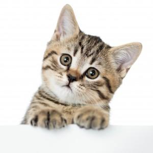 Le chat est surpris