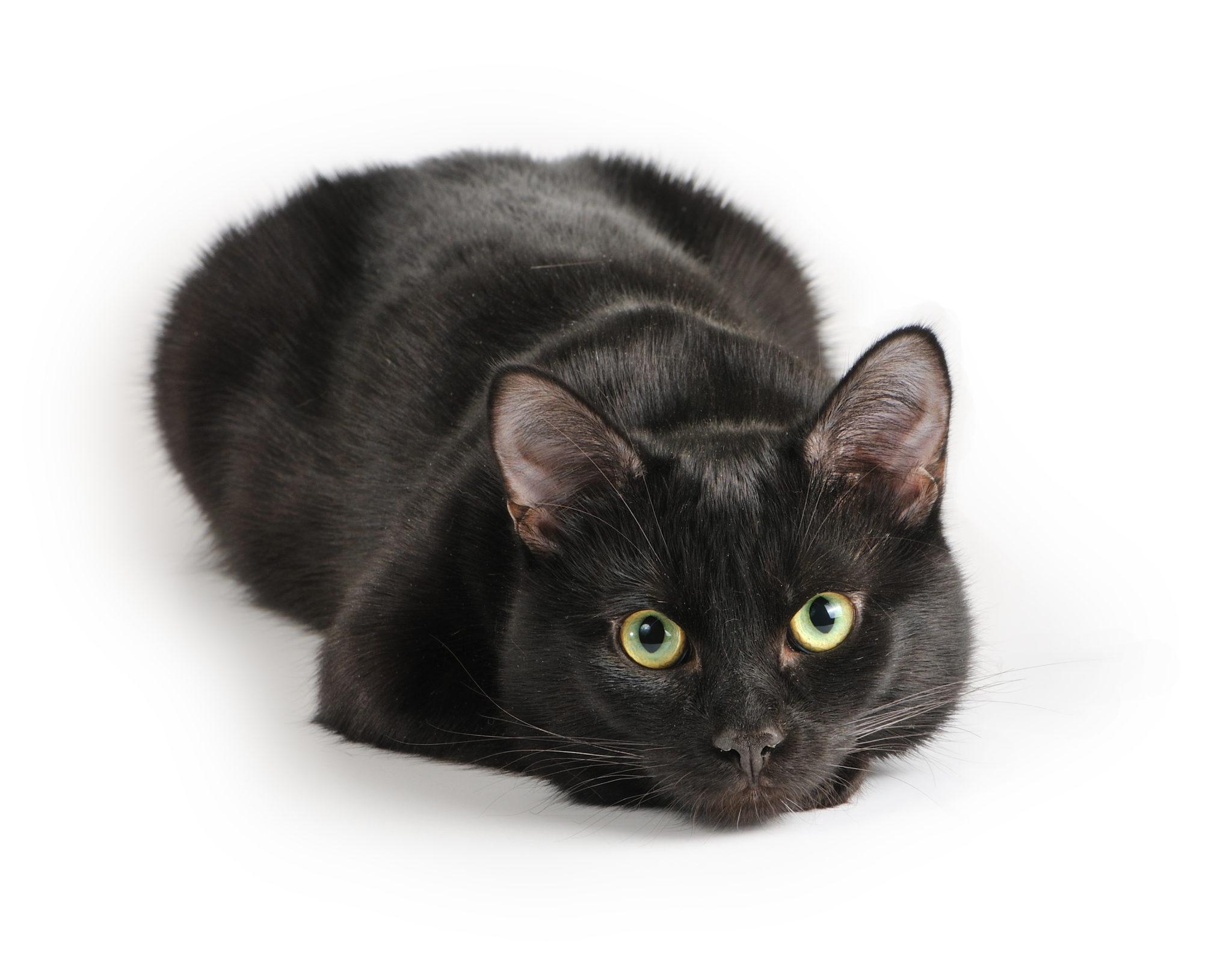 Chat noir allongé sur le sol