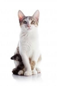 Fontaine d'eau fraîche, bon pour la santé du chat