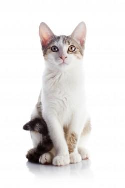 Santé du chat et fontaine d'eau