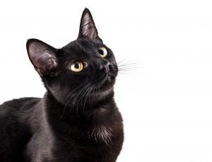 Le chat n'aime pas les changements brutaux, allez-y en douceur et avec méthode !