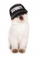 Accessoires pour chat, les indispensables