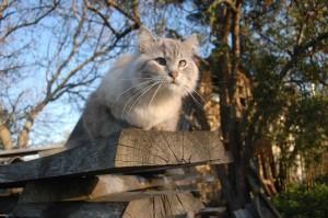 chat_printemps