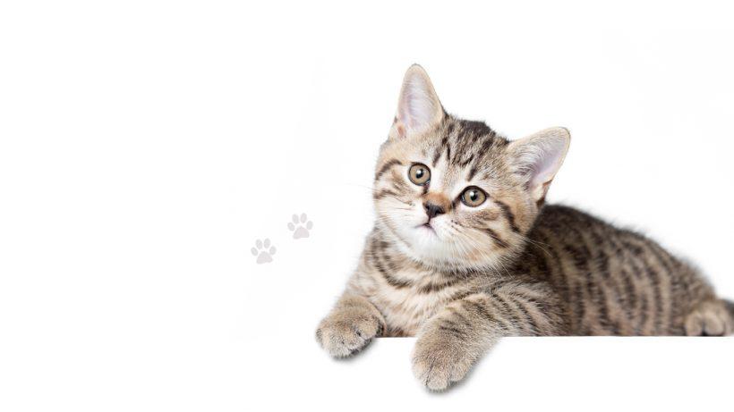 Le guide de référence de la fontaine à chat