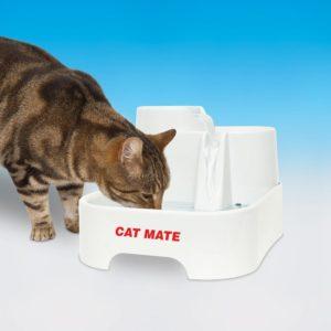 Chat qui boit à la fontaine Cat mate