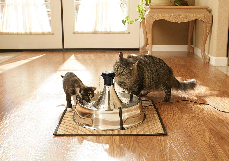 La fontaine pour chats, une source d'eau pure permanente