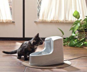 Un chaton boit à la fontaine d'eau Drinkwell mini