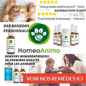 Homéopathie pour chat
